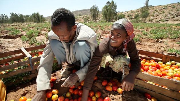 Ethiopia agriculture (photo: AgriFin)
