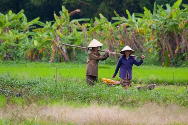 Vietnamese farmers